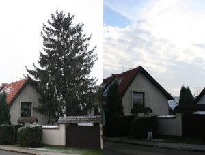 Kácení stromu mezi domem, studnou a vchodem