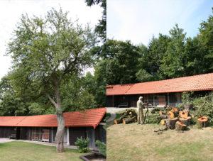 Kácení stromu u voliér pro exotické ptactvo
