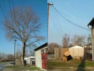 Kácení stromu u rozvodu elektřiny